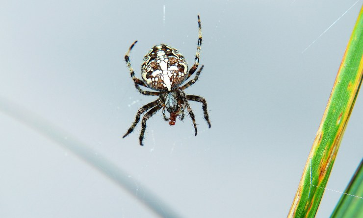 eliminare i ragni in casa