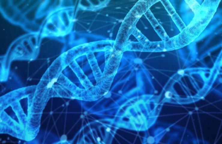 Dna e anticorpi neutralizzanti