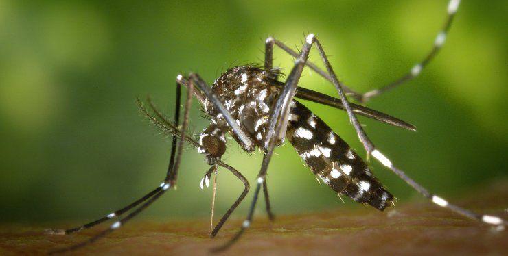 rimedi naturali punture zanzara