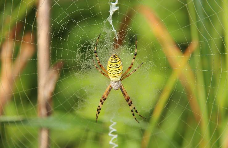 Ragno in una ragnatela