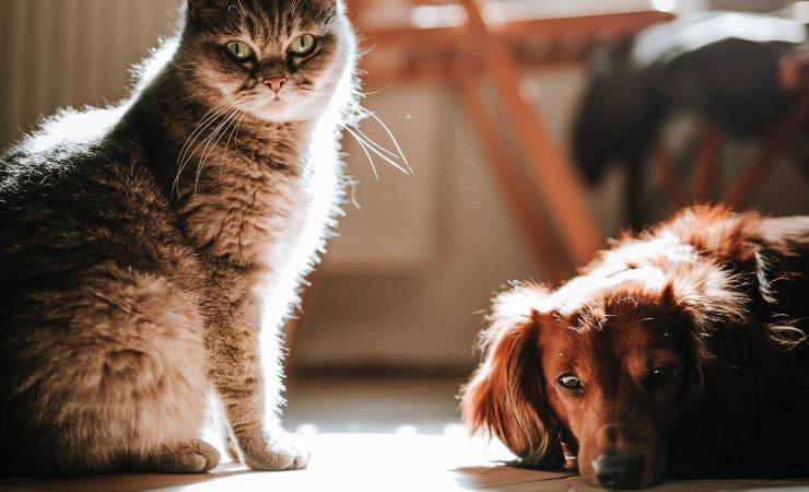 caldo protezione animali domestici