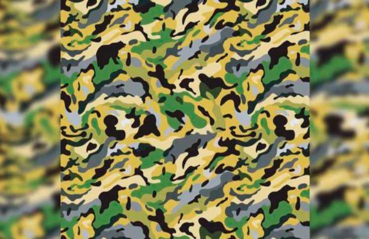 Puzzle visivo orso