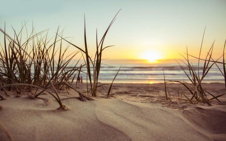sabbia e piante al tramonto