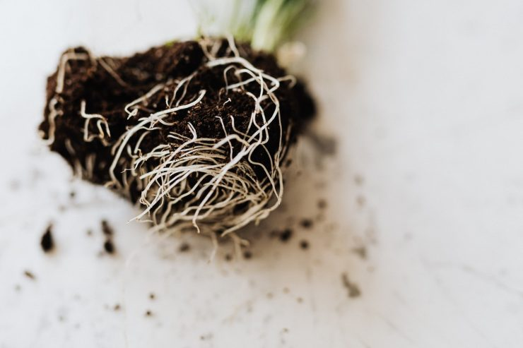 piantare in vaso la lattuga