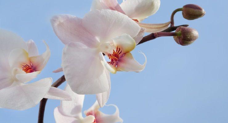 vaso adatto per Orchidea