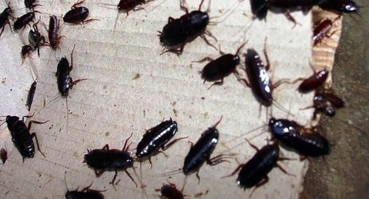Eliminare baltte e scarafaggi