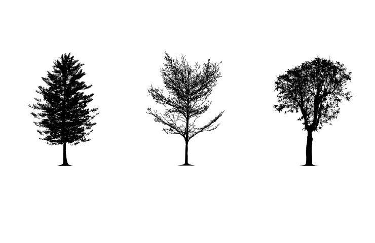 Test della personalità alberi