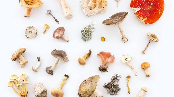 determinare funghi andati a male