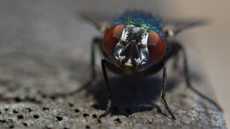 come liberarsi dalle mosche