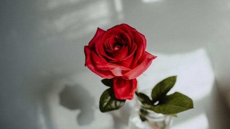 mantenere fresche le rose più a lungo