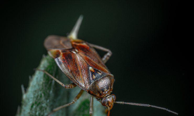 fobie degli insetti