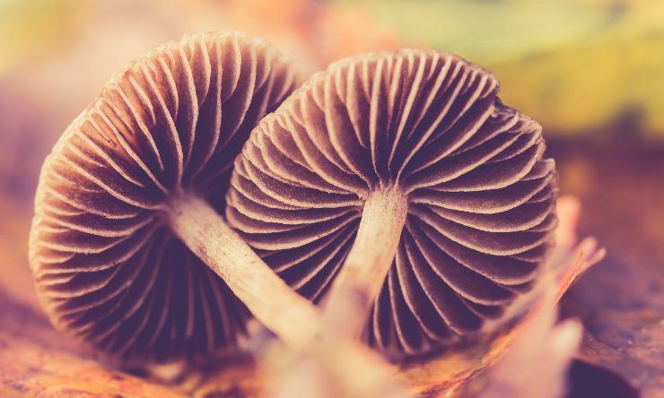 funghi contro raffreddore