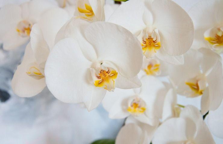 Orchidee come proteggerle dal freddo