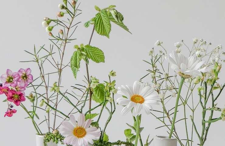 come creare una composizione con la plastica e le piante