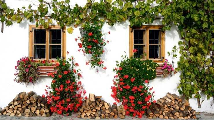 piante facili coltivare esterno