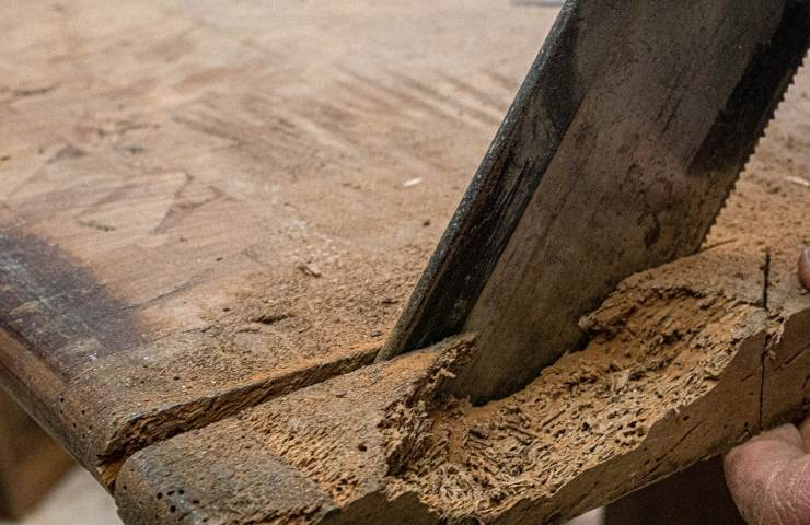 parassiti legno pericolosi per l'uomo