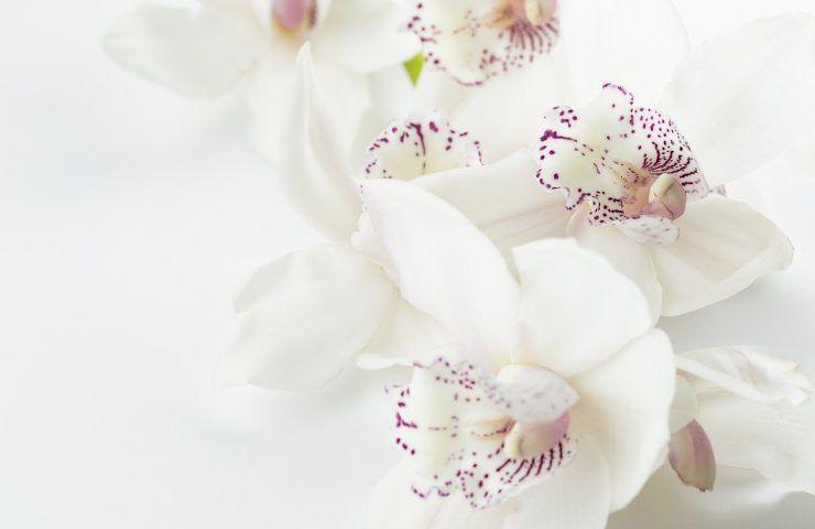 gusci uovo: usali per le orchidee