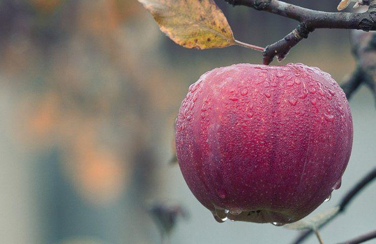 ricetta pan di mele