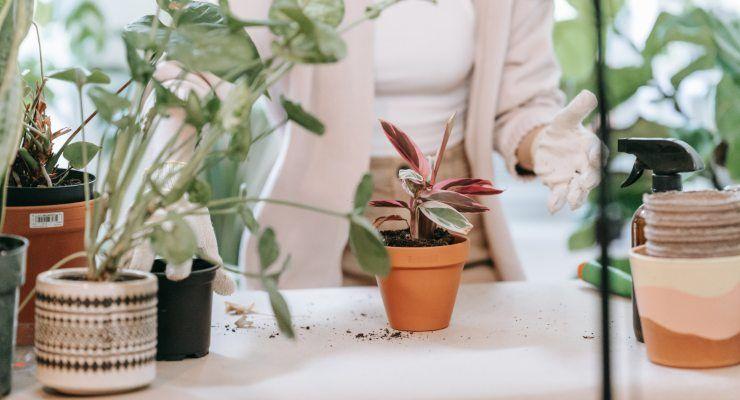 piante fuori il balcone