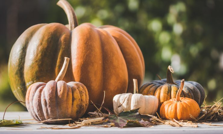 zucca in autunno