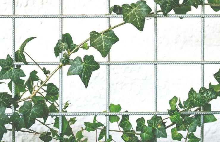 una nuova pianta per il vostro balcone