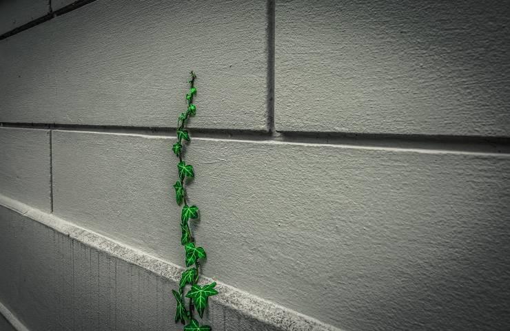 come proteggere il bagno dall'umidità con una pianta