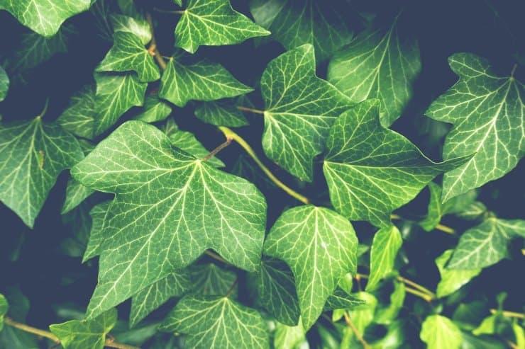 piante casa poca luce