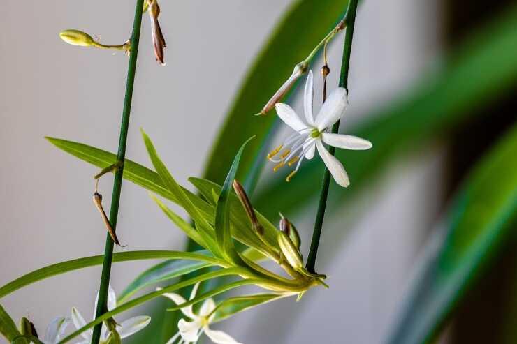 piante appartamento poca manutenzione